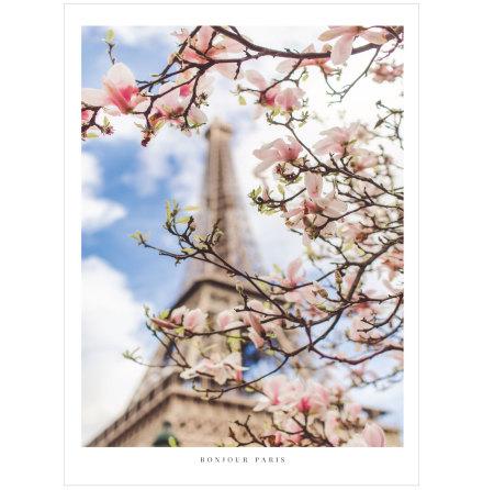 FOTOKONST PARIS SPRING FLOWERS